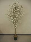 Tree, Dogwood