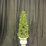Tree, Ivy Topiary, 30″