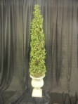 Tree, Ivy Topiary, 58″