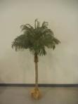 Tree, Palm 5′